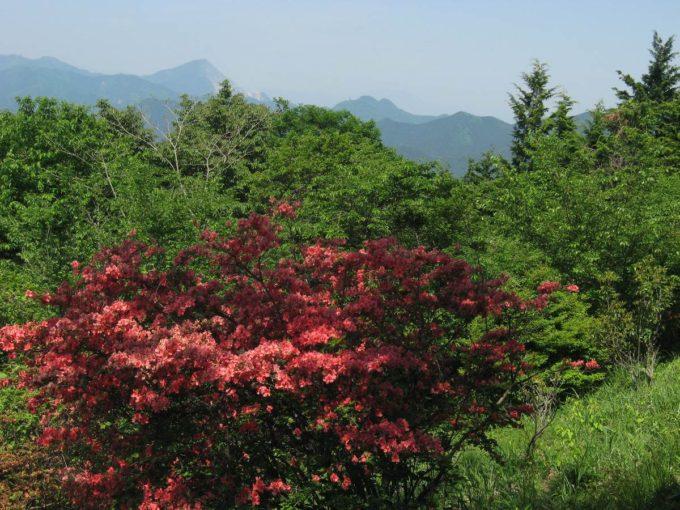 春の関八州見晴台