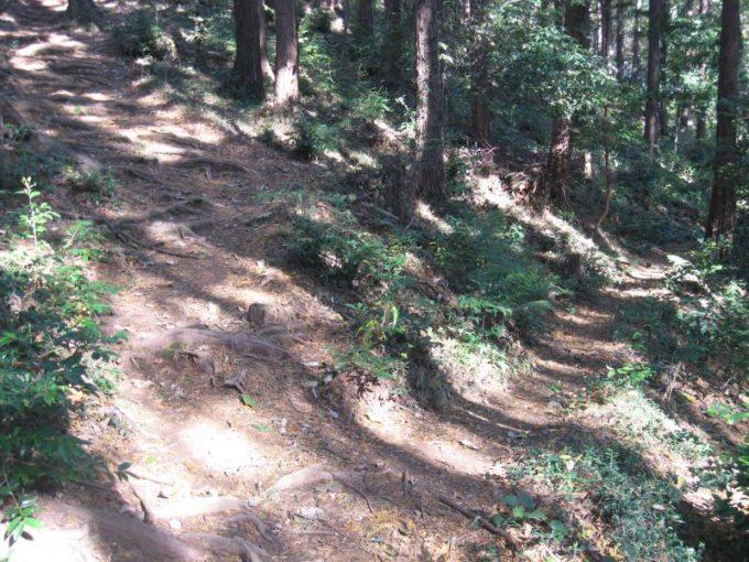 森の中にある登山道の分岐
