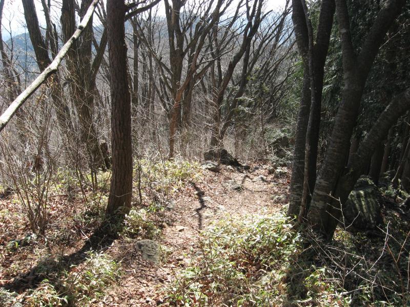 つづら岩から鶴脚山の尾根道の写真