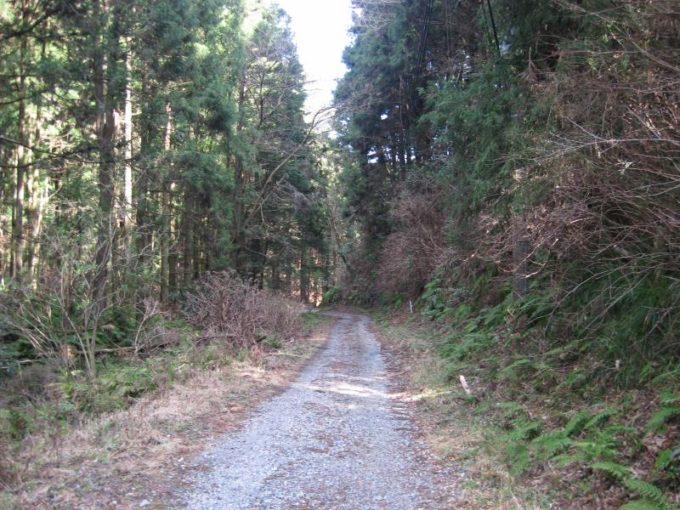 下山ルートの林道