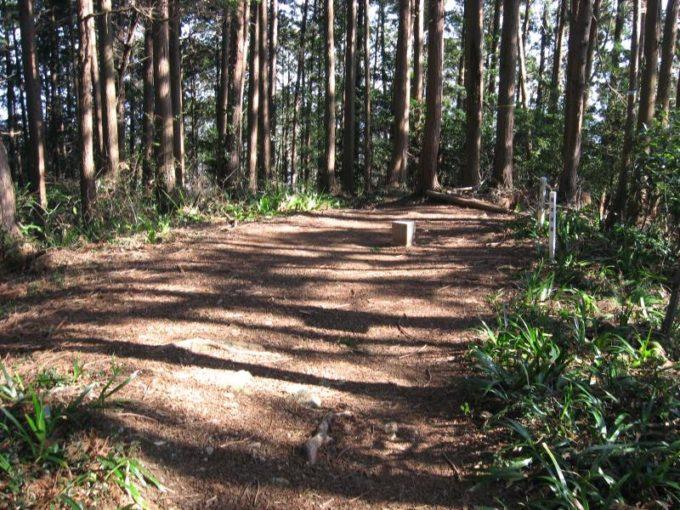 森の中にひっそりの佇む物見山の一等三角点