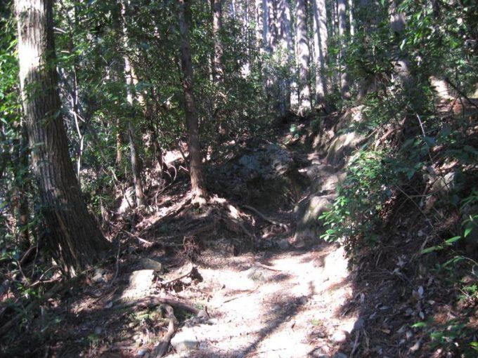 急な登りの続く登山道