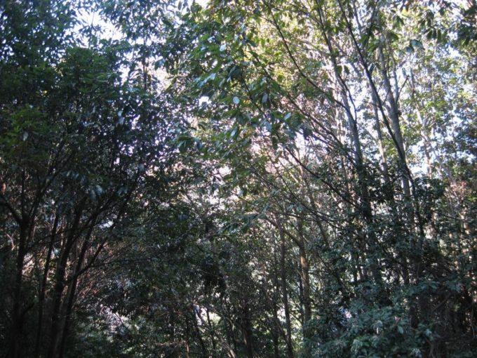 見晴らしをさえぎる樹林
