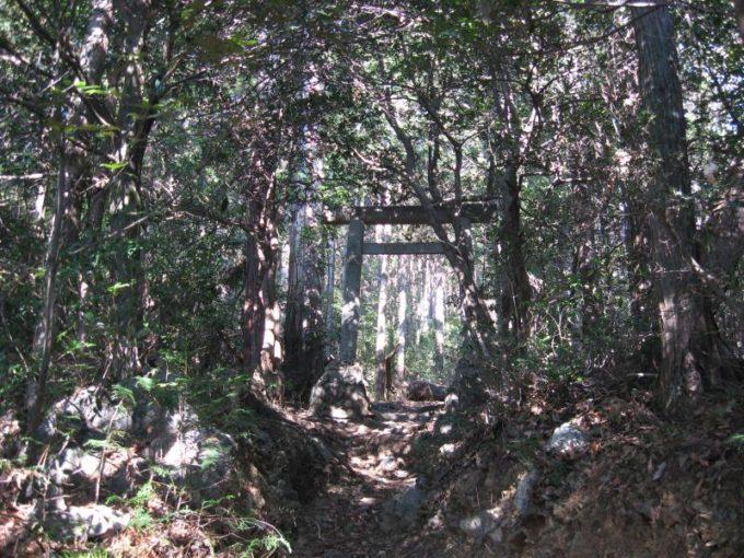 森の中に現れた鳥居
