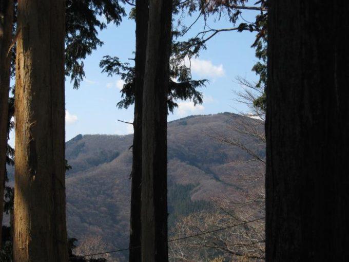 樹林の間から見える棒の折れ山