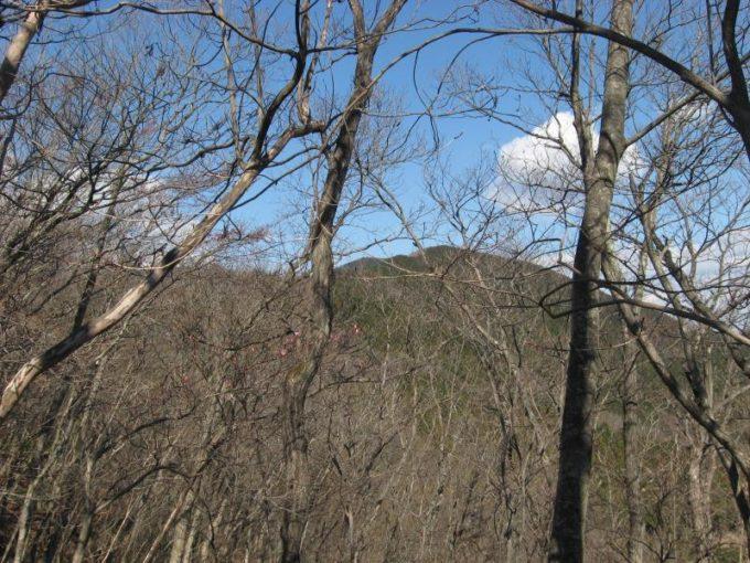 樹林の間から見える蕨山展望台