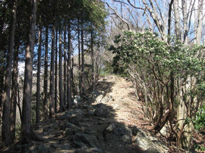 尾根づたいの登山道