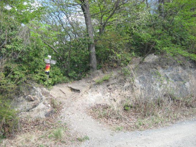林道を横切って再び登山道へ