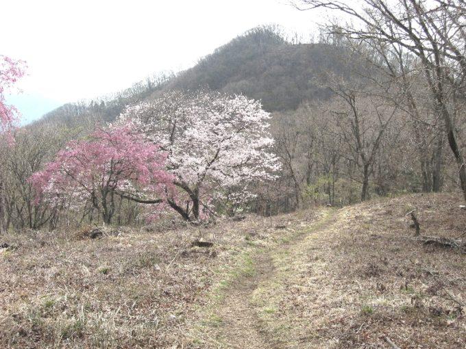 浅間嶺山頂付近から松生山方向の眺め(撮影:4月20日)