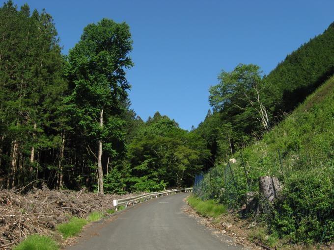 明るい林道