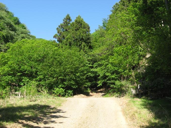 他の林道との合流場所