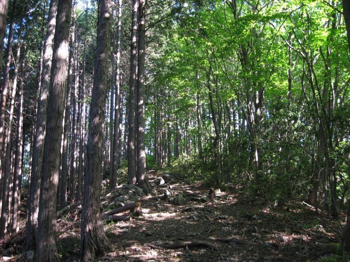 植林帯と自然林の境目にある登山道
