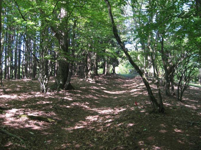 武川岳山頂手前の登山道