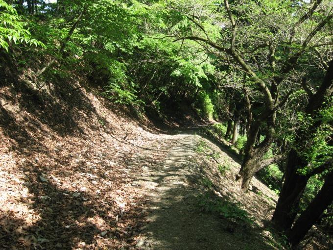 登山道変更後の林道