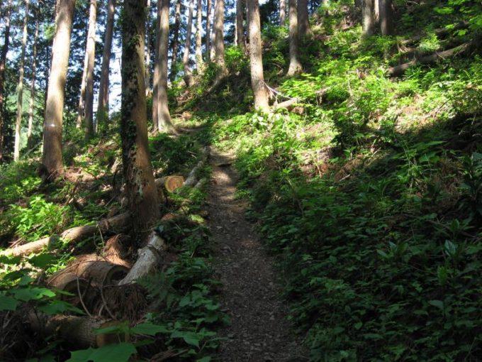 尾根筋近くの登山道