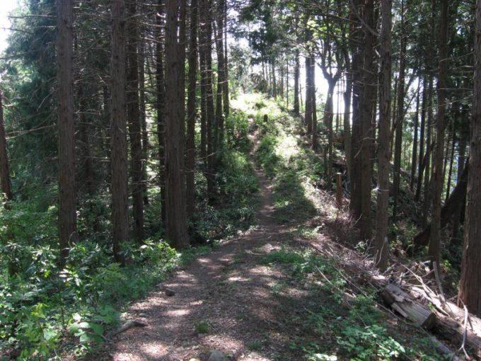 尾根筋の登山道