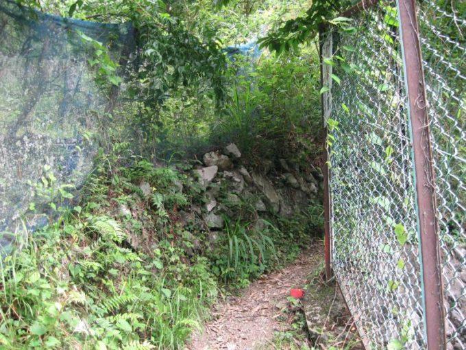 登山口付近の登山道