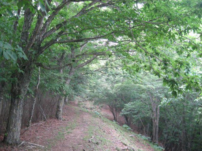 六つ石山への登山道