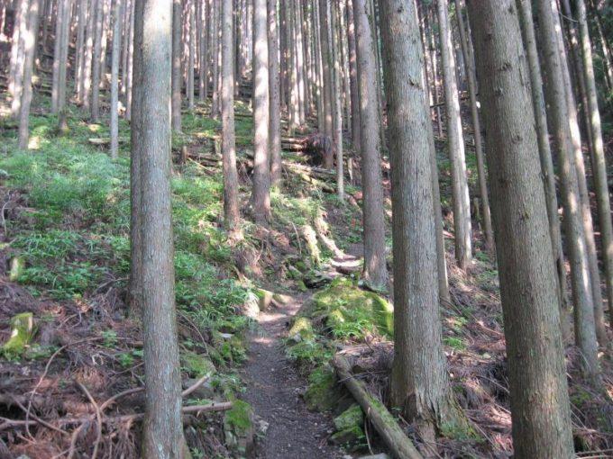鷹ノ巣山への登山道