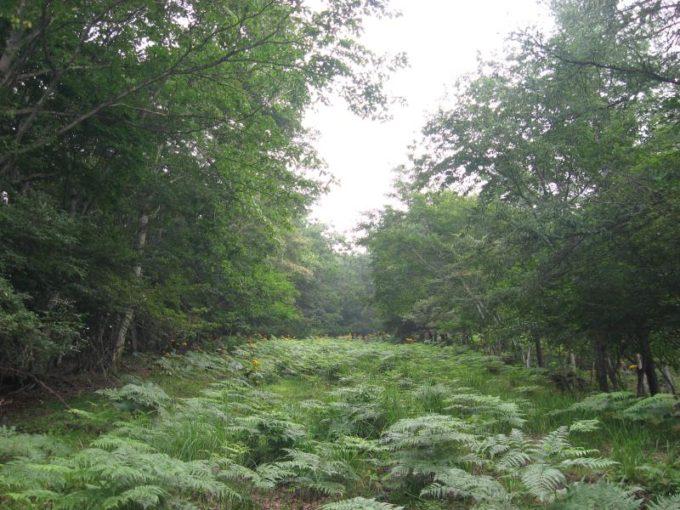 下草の生い茂った登山道