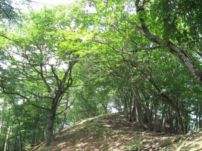 明るい尾根筋の登山道
