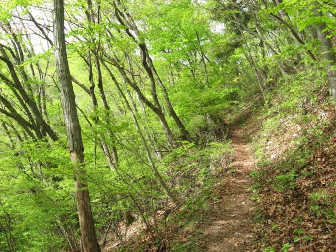 新緑の登山道(浅間峠)