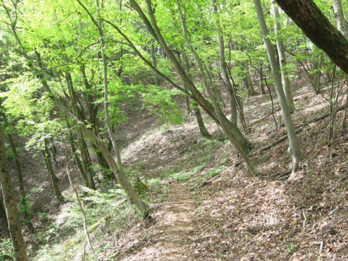 浅間峠から熊倉山への登山道