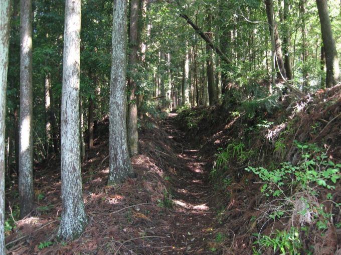 登山道らしくなってきました。