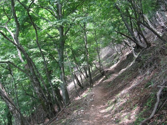ブナ坂への登山道