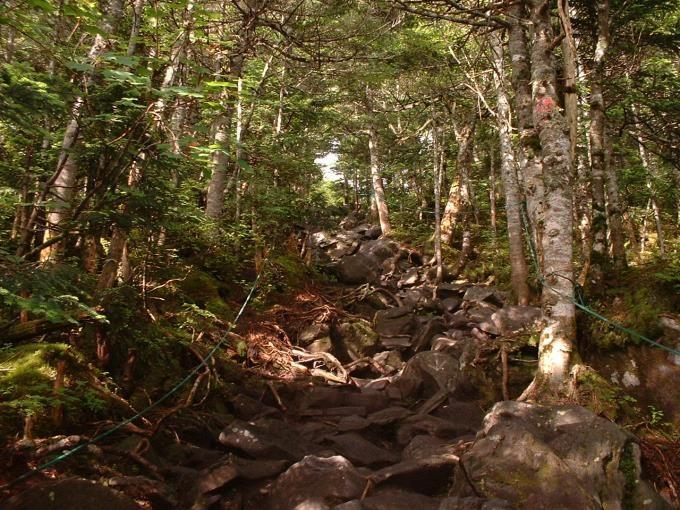 蓼科山荘から続く樹林の中の急な登り