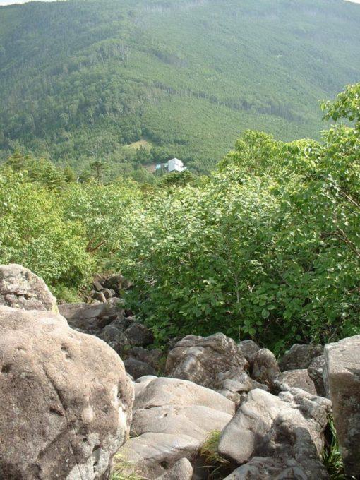 樹林を抜けた登山道から蓼科山荘を見下ろす