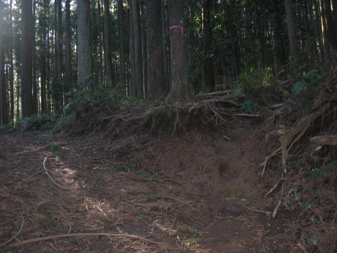 林道を横断