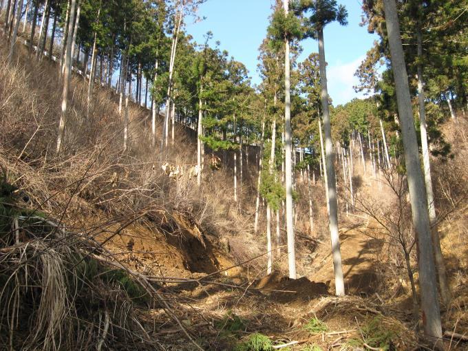 林道のガードレールが見える場所