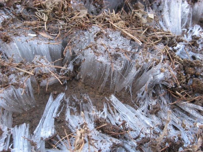 溶ける気配のない霜柱