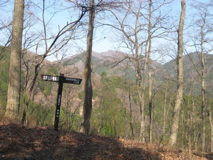 樹林の間から見える三頭山と大沢山