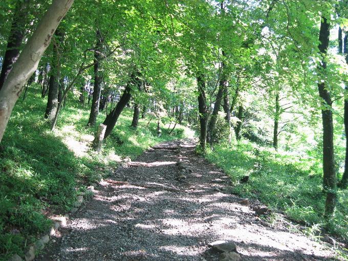 整備された公園内の道