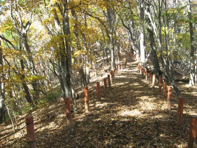 気持ちの良い遊歩道のような登山道