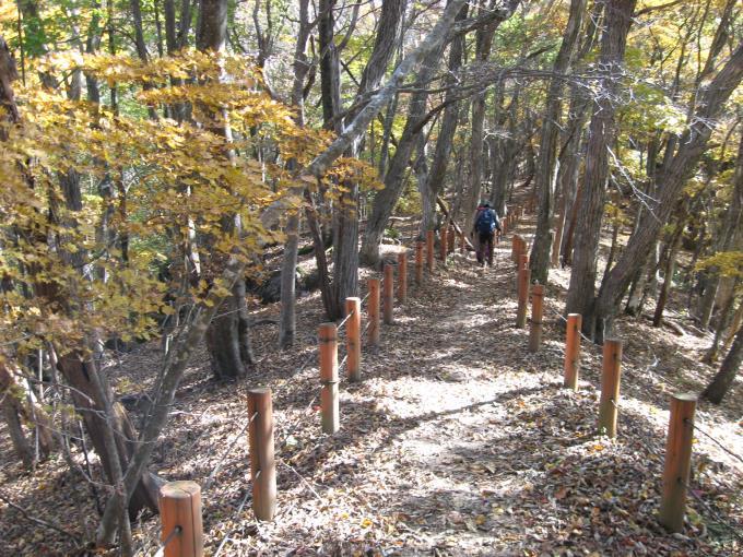 都民の森への下山道