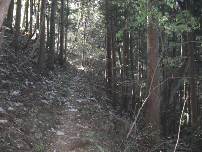 日当たりの悪い登山道