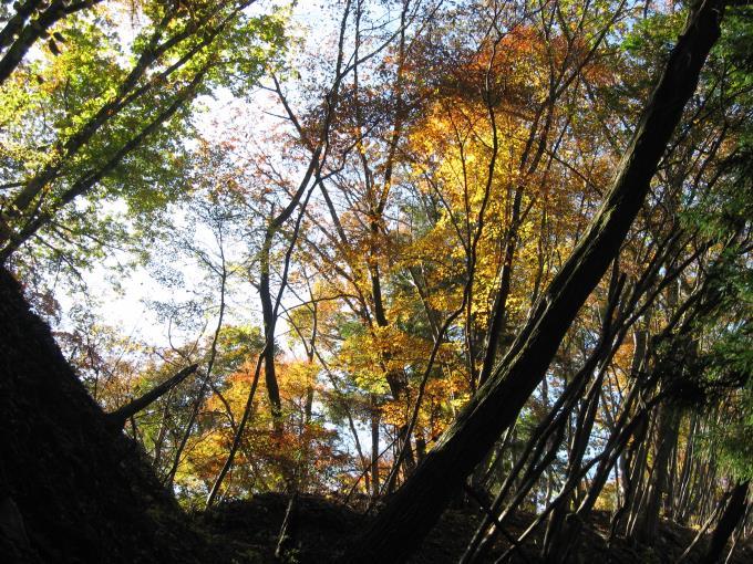 紅葉した自然林