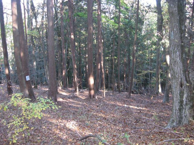 浅間峠と日原峠の間の登山道