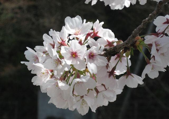 gozenyama04