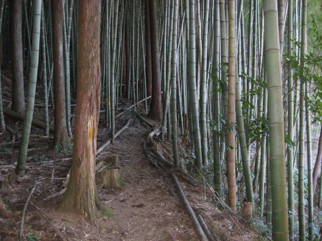 戸倉城山の登山道の写真