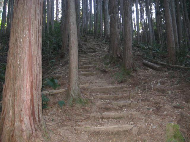 登山道の階段の写真