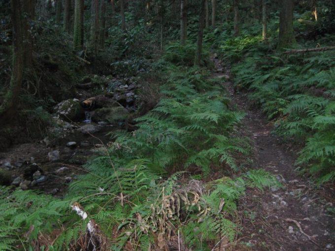 シダの生い茂る登山道