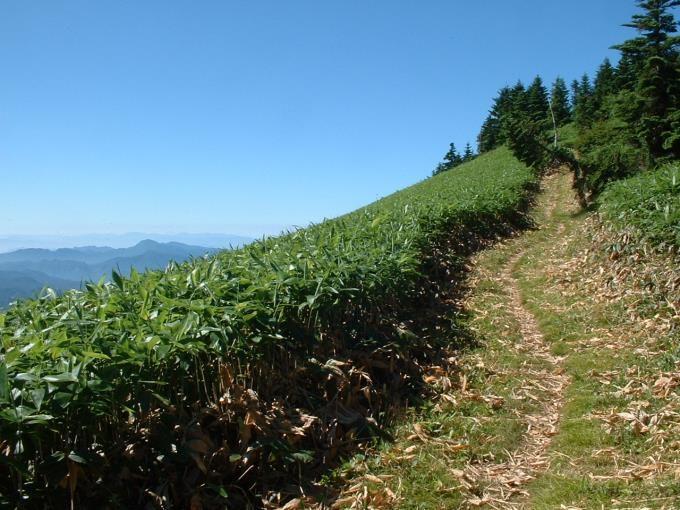 開放的な登山道