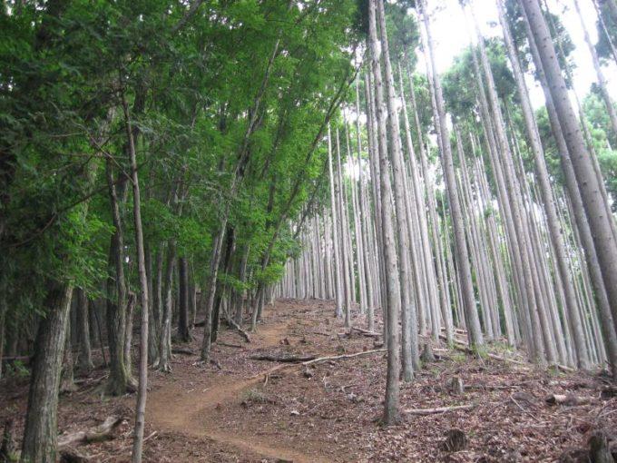 自然林と植林帯の境目