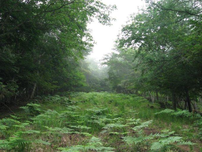 下草の生い茂る登山道