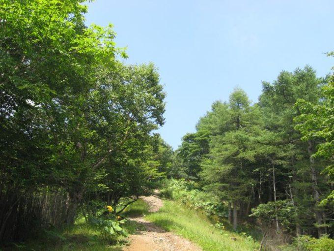 空が開けてきた登山道