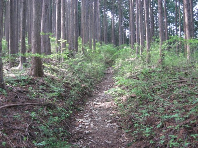 浅間峠への登山道